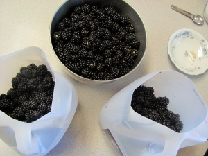 blackberries we picked from the bushes on the Greene property they made for amazing pie