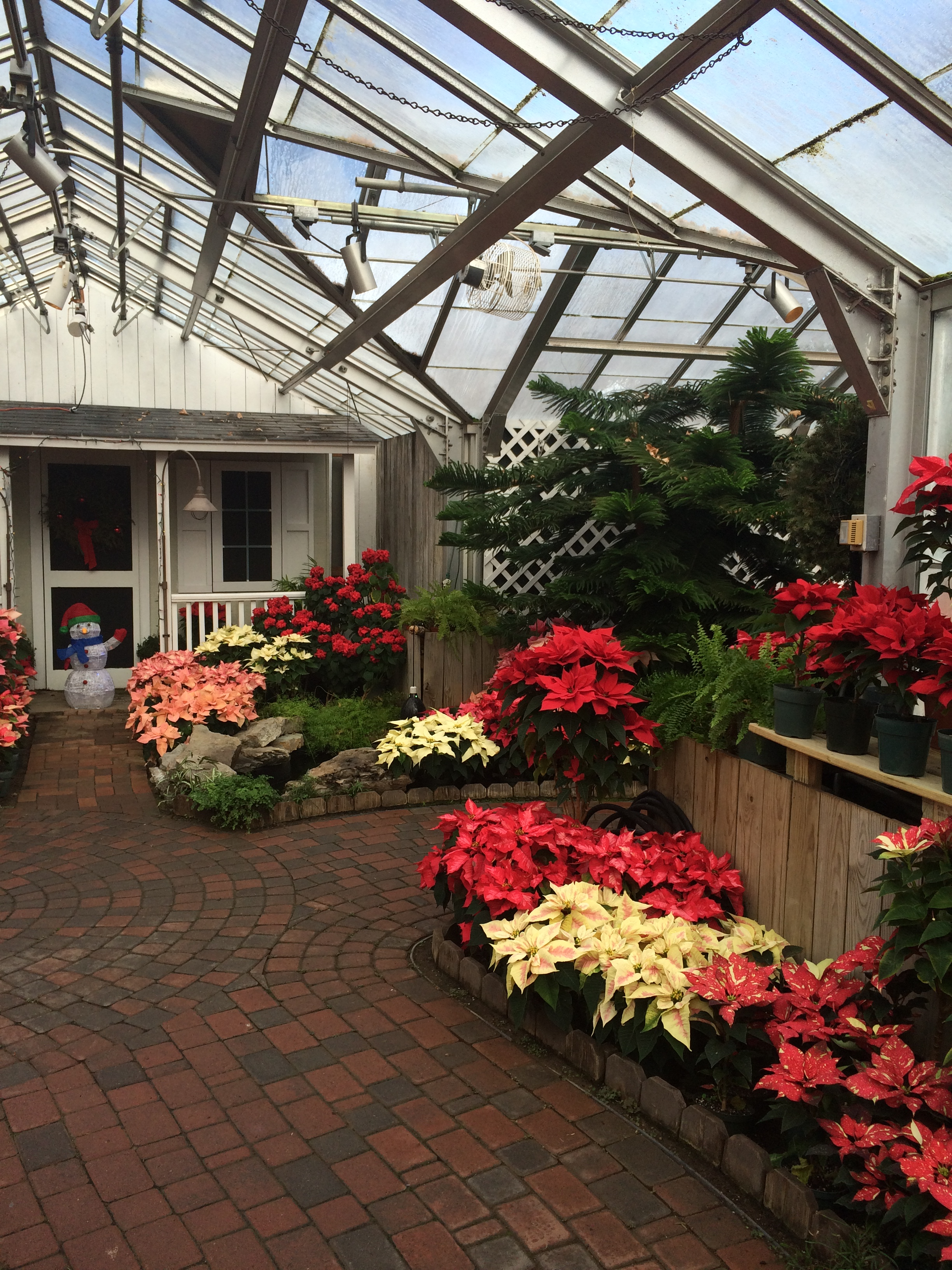 Although Luke And I Had Been To Highland Park Several Times, We Had Never  Gone To The Lamberton Conservatory. We Decided To Take My Parents Because  At ...